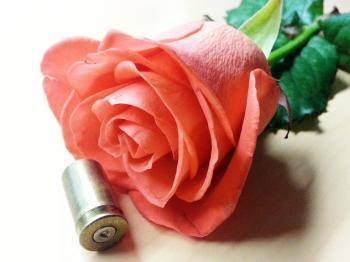 rose&45.jpg